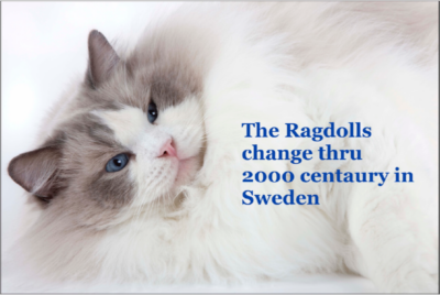 The Ragdolls change through 2000 century in Sweden