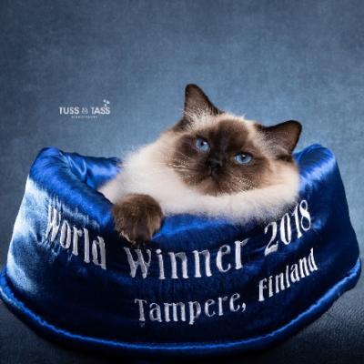 Årets SRC-katter 2018
