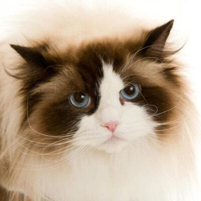 Årets SRC-katter 2012