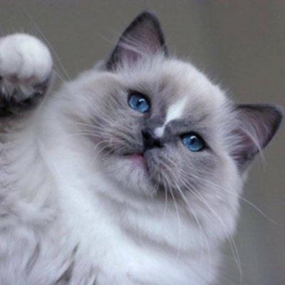 Årets SRC-katter 2016