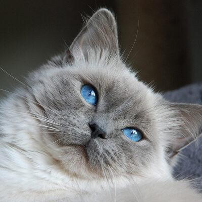Färger - Blå